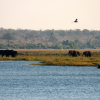 Thumbnail image for Travel along Zambia's Chobe River