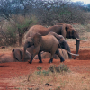 Thumbnail image for Elephant, Buffalo, Balloon: The Best African Safaris by Private Jet