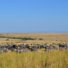 Thumbnail image for 5 of the Most Diverse Things to do in Kenya