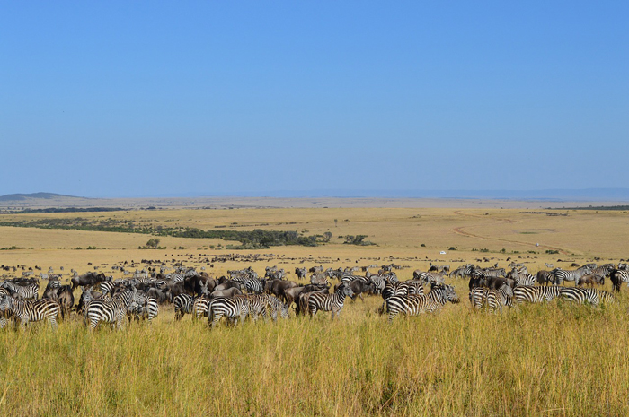 5 of the Most Diverse Things to do in Kenya